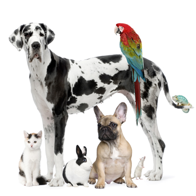 Hopewell Animal Hospital - Veterinarian serving  Louisville, J-Town and Middletown - Welcome to our site!